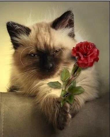 Un fiore per te!