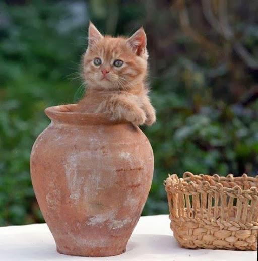 Kitty in the jar