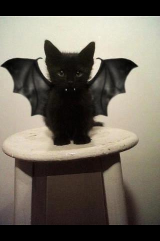 Bat kitten