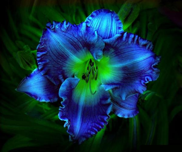 Blue floral kaleidoscope