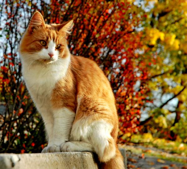 A cat in autumn