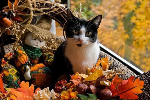 Chat d'automne