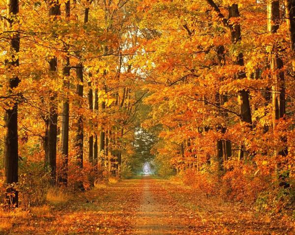La forêt en automne