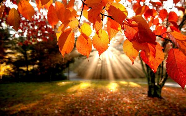 Rays of autumn