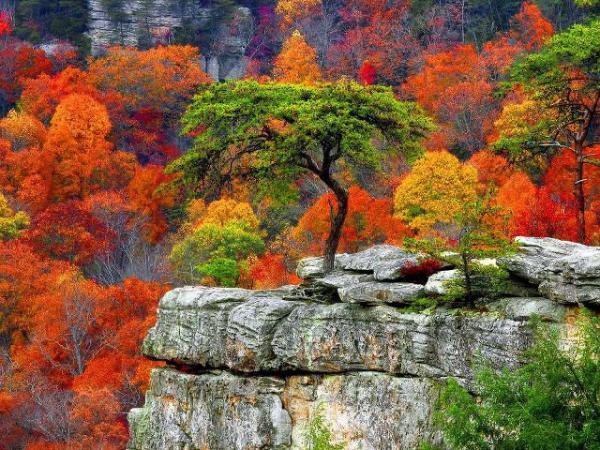 Triomphe de couleurs